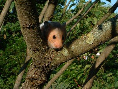 Nagarium - die schönste Wohnung für Deinen Hamster