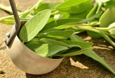 » Salbei als natürliche Heilpflanze