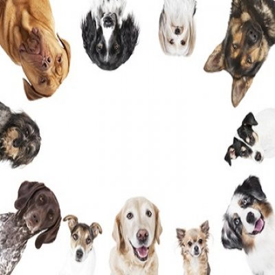 Wissenswertes über Hunde - Was Sie wissen sollten