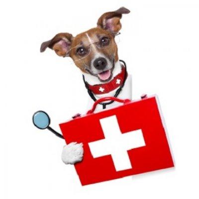 Krankheiten beim Hund Auflistung - Der Pfoten Freund